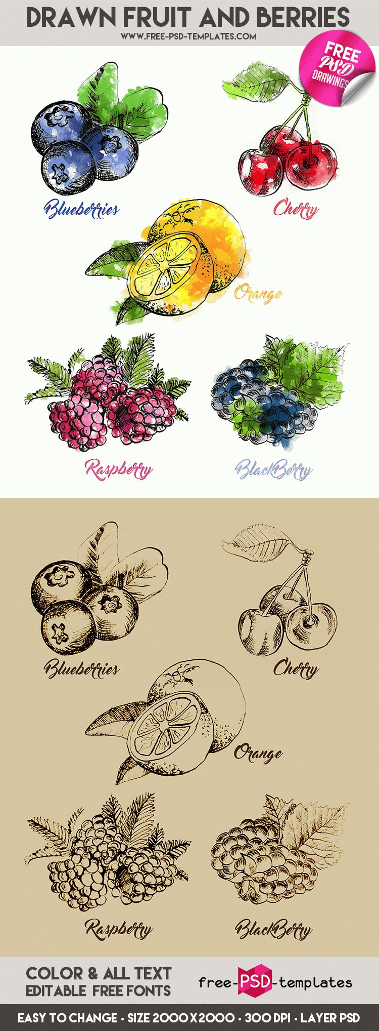 Preview_Drawn_Fruit_and_Berries_result